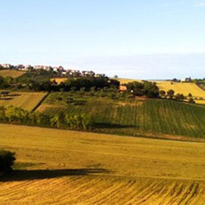 immagine-attivita-agricolo-avv-picciotti-quadr